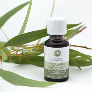 eucalyptus essential oil recipes